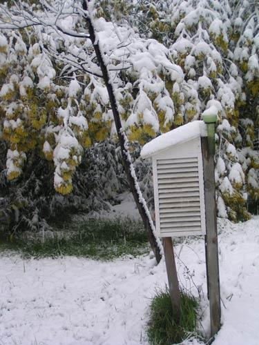 mimosas-neige2.jpg