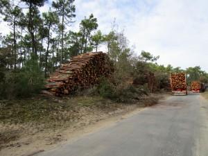 piles de bois aux Eloux mars 2015